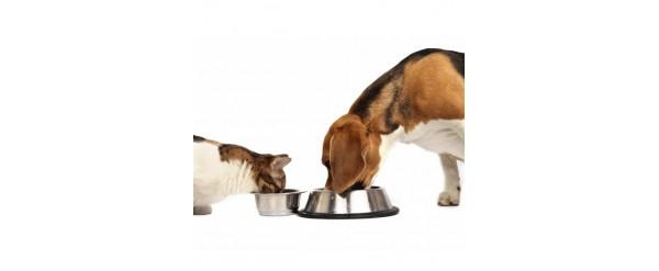 Porqué darles Alimentos Balanceados a tu Perro o Gato?