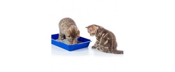 Cómo elegir el  Sanitario para mi Gato?