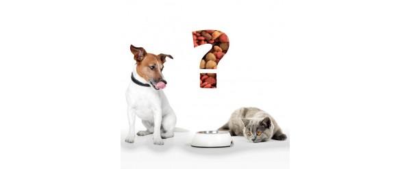Que alimento Balanceado elegir?